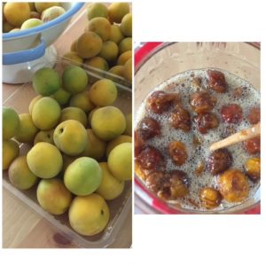 picture of making Japnese plum enzyme