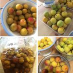 pict of Japanese plum enzyme