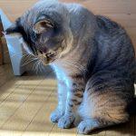 pict of cat